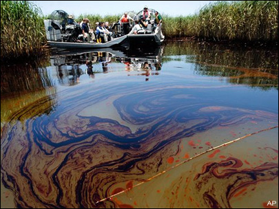 Oil from the Deepwater disaster washes up in Louisiana Wetlands