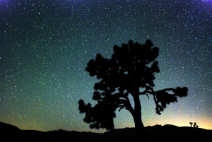 Joshua Tree Photo by Bruce Day for National Park Service