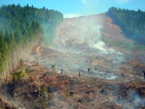 Forest clearcut burning