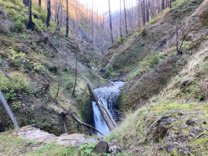 Oneonta Gorge after Eagle Creek Fire