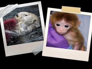 otter & monkey collage