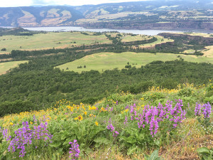 View of Columbia Gorge from Tom McCall Point