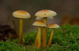 Five small, cute, white and brown mushrooms sit in the grass