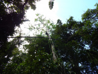A woman scientist hangs form a climbing rope in the rainforest canopy to hang microphones